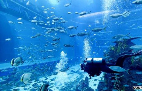 Besökare kommer att kunna dyka med djuren. Foto: RWS