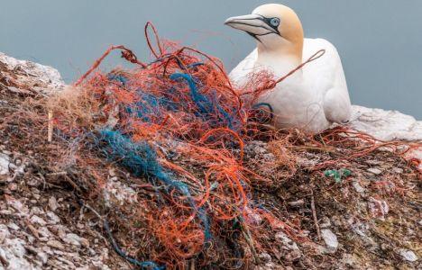 Plast skadar det marina livet