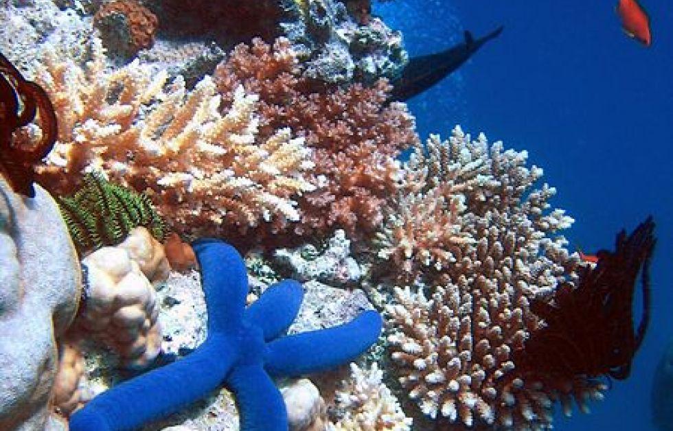 Korallrev Foto: Wikipedia