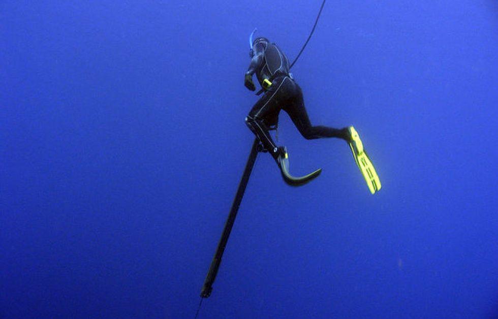 Harpunfiske Foto: Wikipedia
