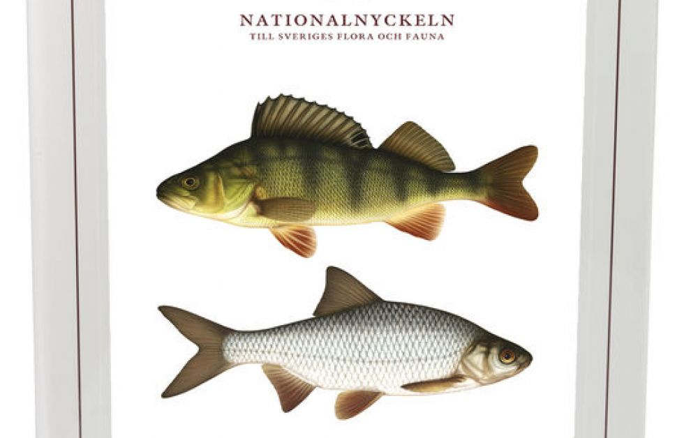Strålfeniga fiskar