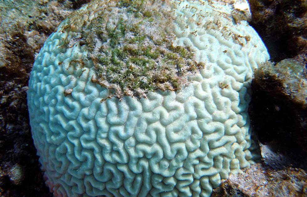 Korallblekning drabbar Indonesien