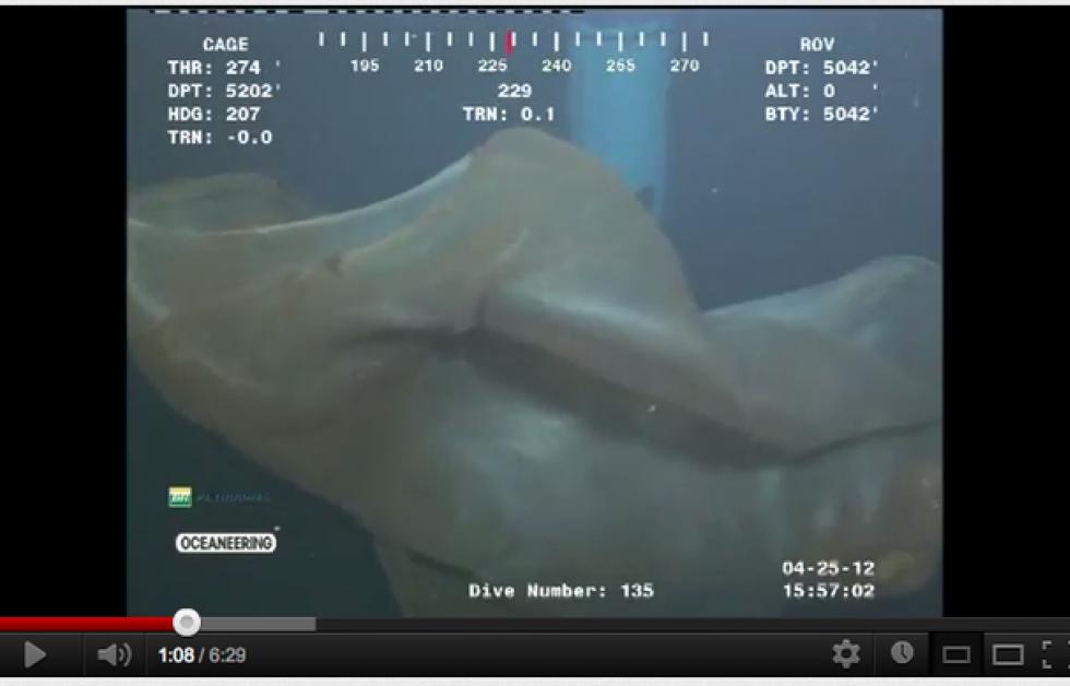 Deepstaria enigmatica. Screenshot: Cascade Creature youtube