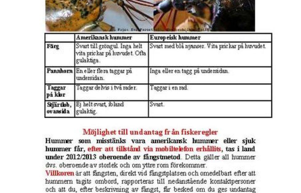 Så skiljer du på en svensk och en amerikansk hummer.