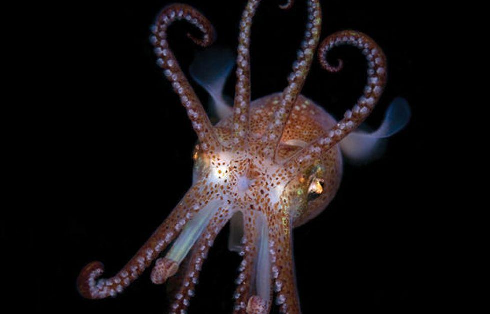 Livet under ytan – en marin artguide av Klas Malmberg.