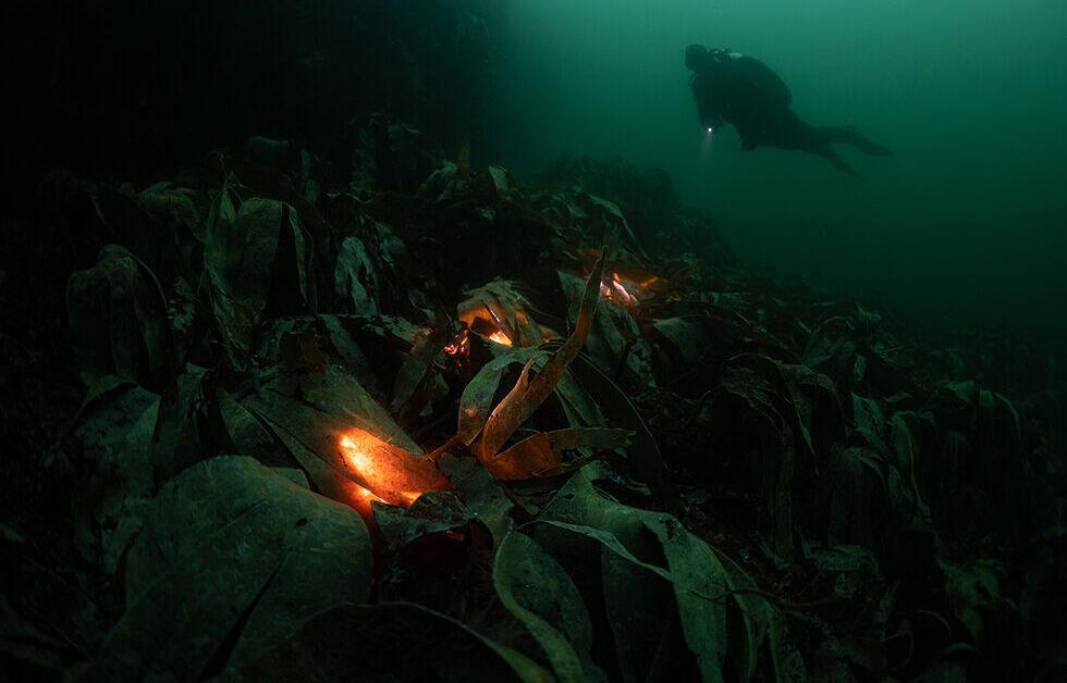 Temabild Guld - Foto: Rikard Godlund