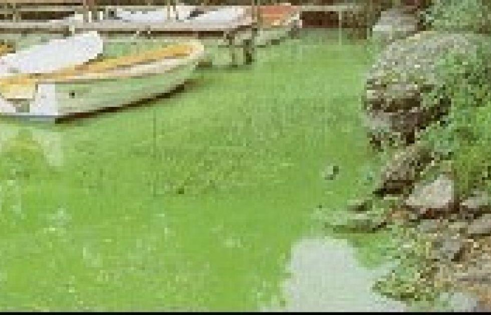 Kraftig algblomning