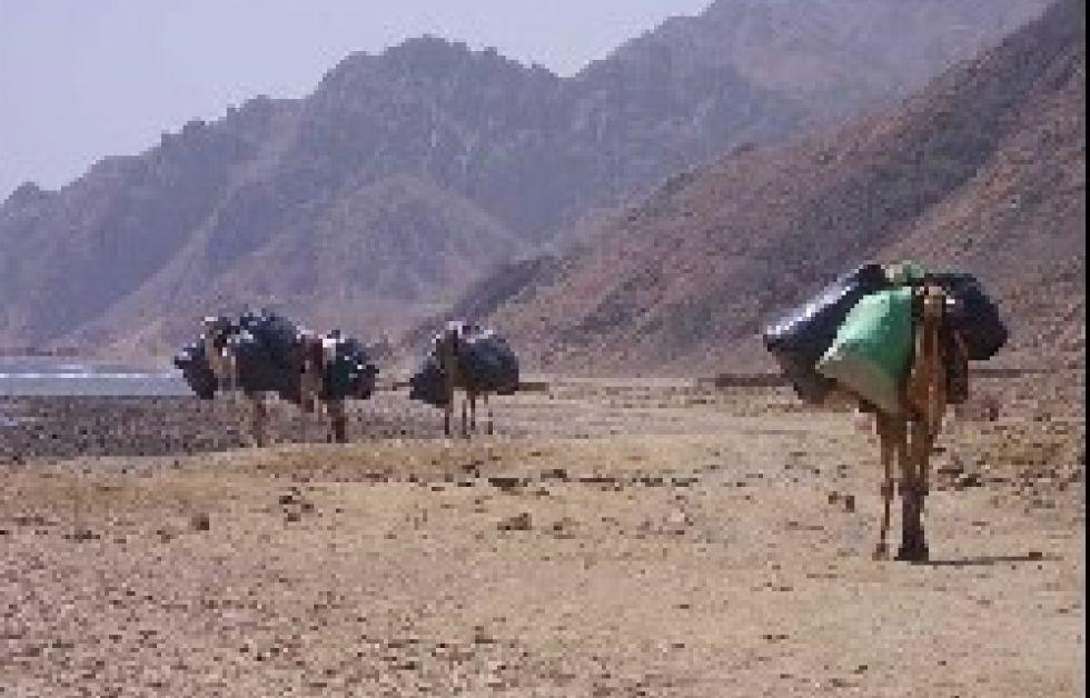 Höststädning vid Ras Abu Galoum