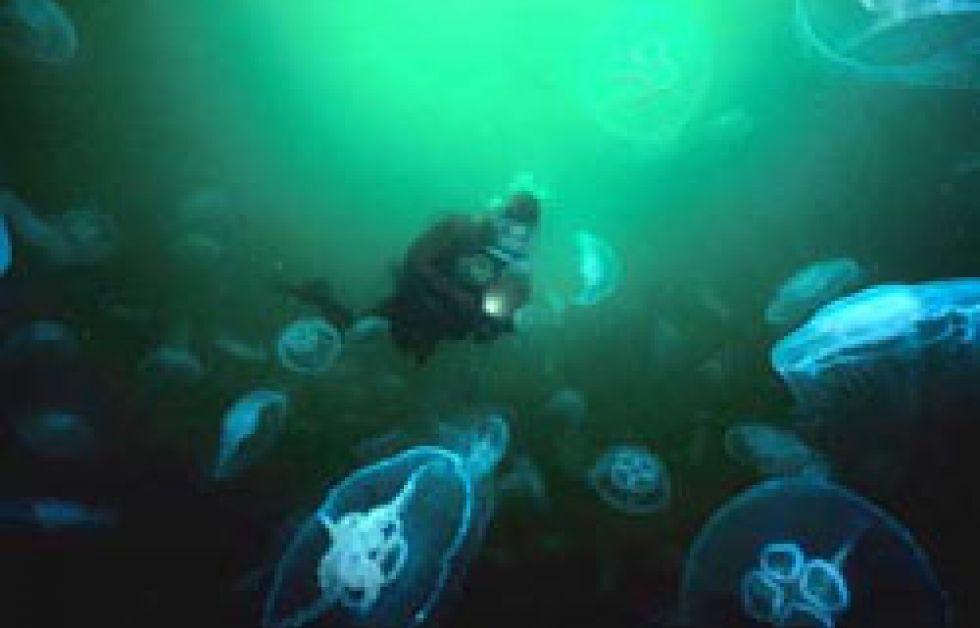 Film om Gullmarsfjorden