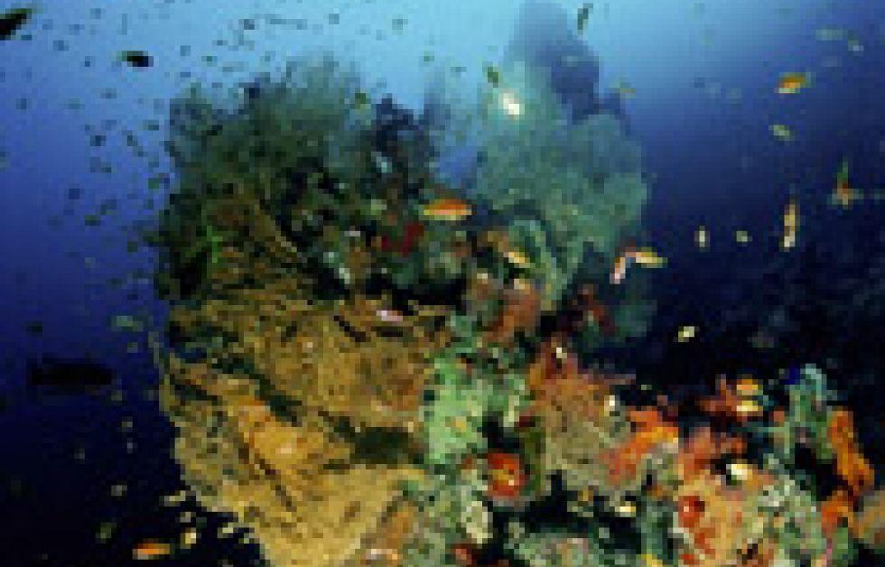 Sinai Divers i Sverige