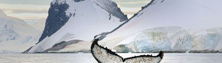 Antarktis – den yttersta gränsen