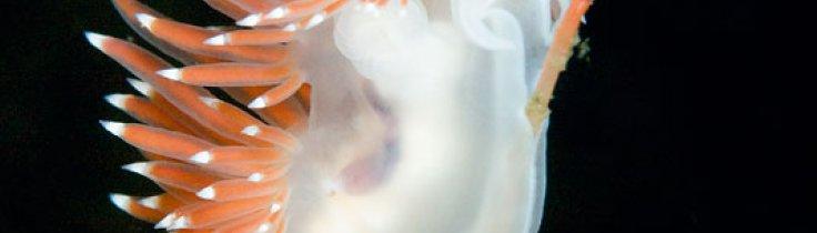 Den nøgne sandhed – 12 almindelige nordiske nøgensnegle