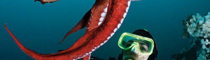 Är du sugen?  Möte med jättebläckfisken
