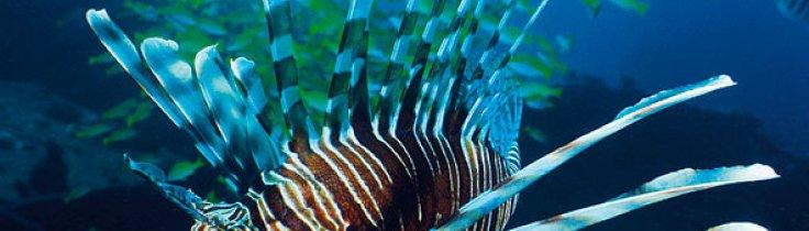 Koh Lanta – lugnet vid Andamansjön