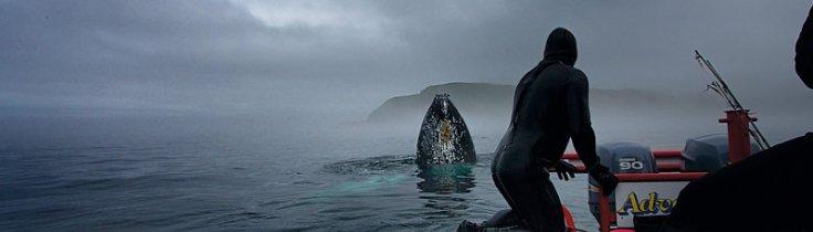 Newfoundland – äventayr i Atlanten