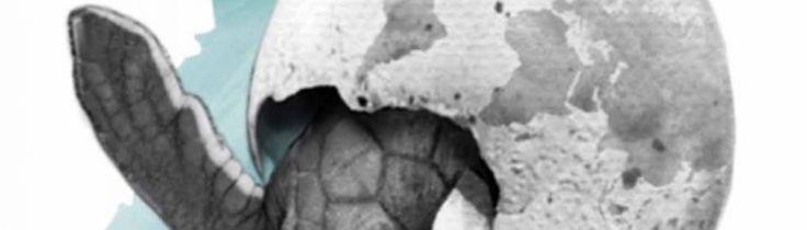 Havssköldpaddor i resväskan