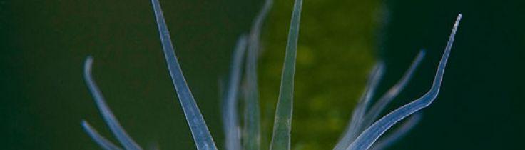 Kräftkalas i Tvedöra – ett grustag i Skåne