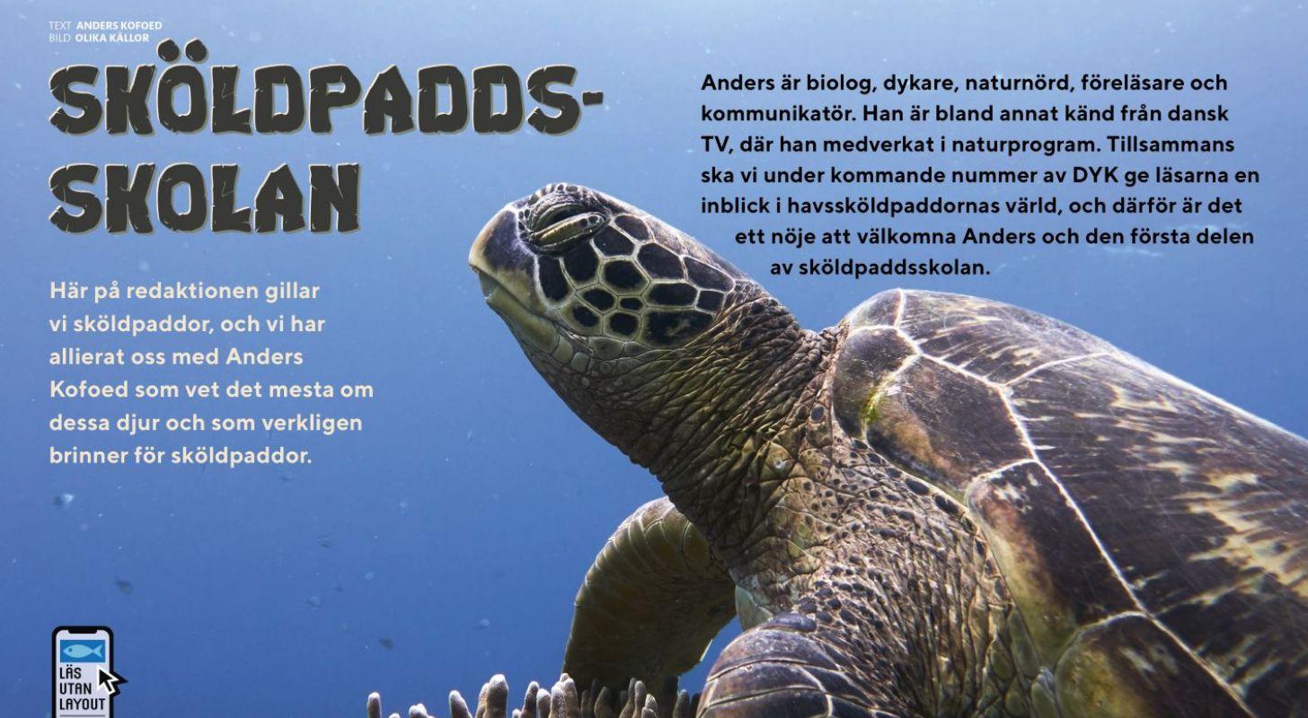 Sköldpaddsskolan: Del 1 – Dykare, lär känna din havssköldpadda
