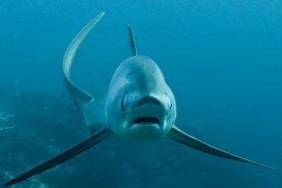 Shark Week på DYK.dk